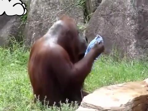 Majmunska posla