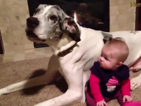 Bebe i Životinje - Kompilacija