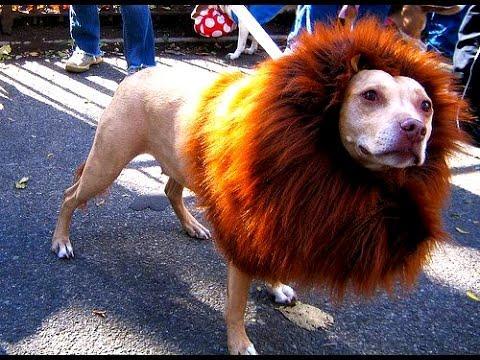 Ko se boji lava još