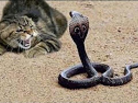 Neustrašive mace koje će vas oduševiti