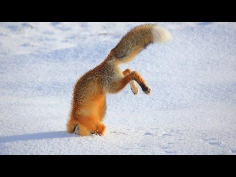Smiješne Životinje Skakanje Uspije - Najbolji Smiješne Životinje