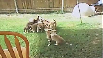 Psi I Mačke - Kompilacija