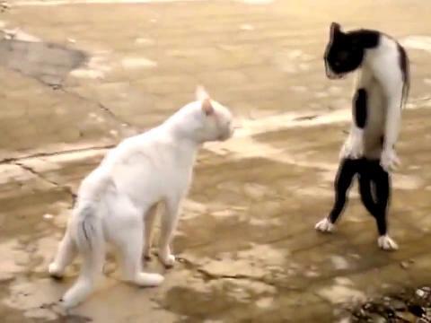 Mace kao hrabre face